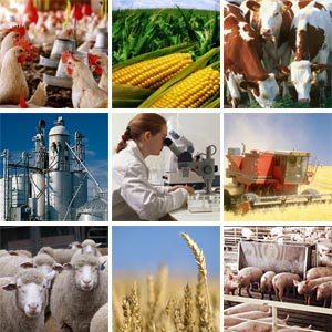 Vietnam Agribusiness Report 2013