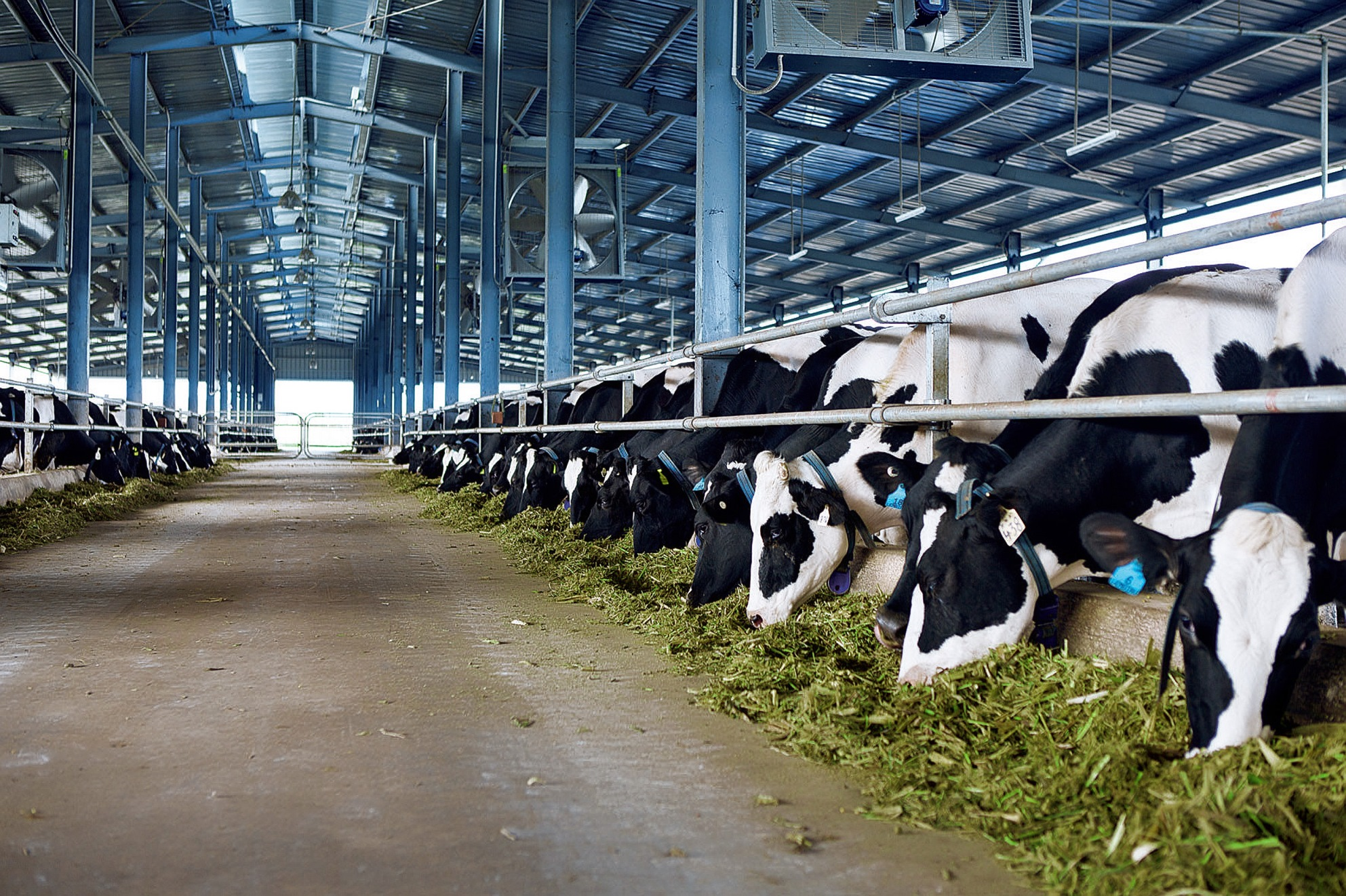 5000268824 - VIETNAM DAIRY COW ONE-MEMBER COMPANY LIMITED